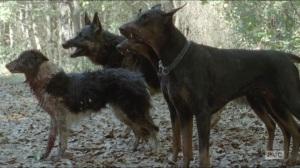 Them- Dogs