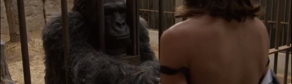 Woman sex with gorilla pictures, big tits free sample porn