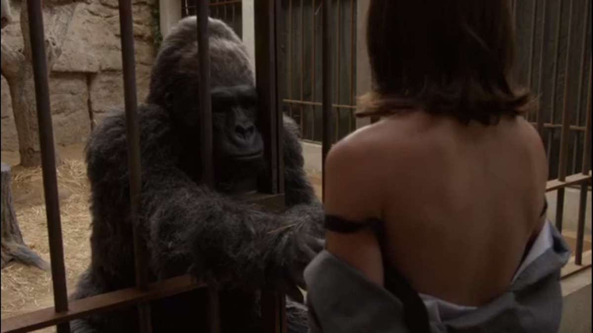 Women And Monkeys Sex-8547