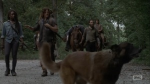 Adaptation- Dog notices something in the woods- AMC, The Walking Dead
