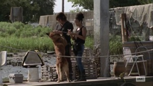 Lines We Cross- Connie brings Dog to Daryl- AMC, The Walking Dead