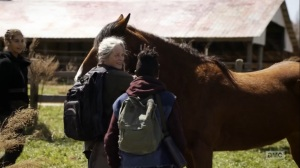 Hunted- Horses come to the dairy farm- AMC, The Walking Dead